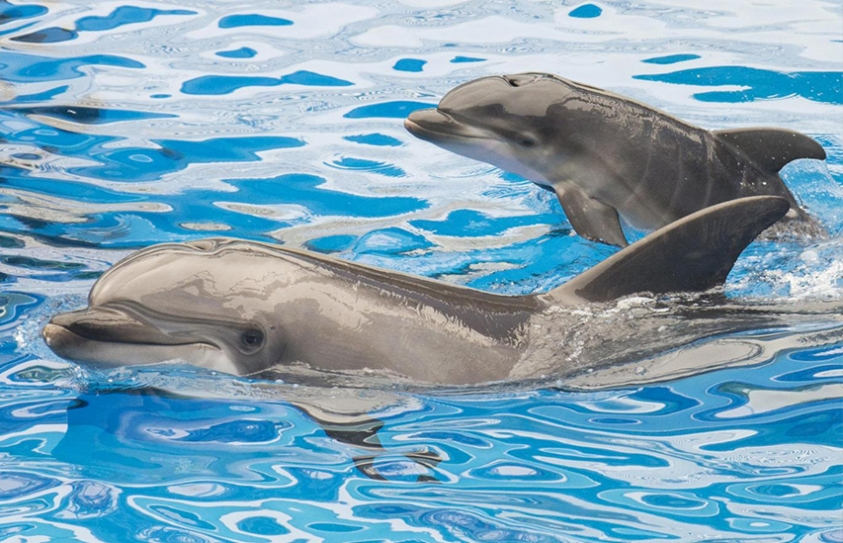 Scientists Once Gave Dolphins LSD In Attempt To Communicate With Them