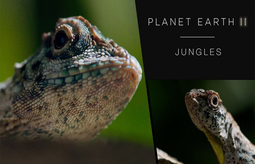 Jungles: An Innovative Take AtFilming Wilderness