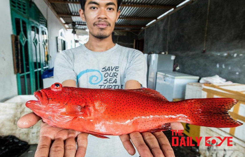 Indonesian Fishermen build Database to protect their Fish Industry