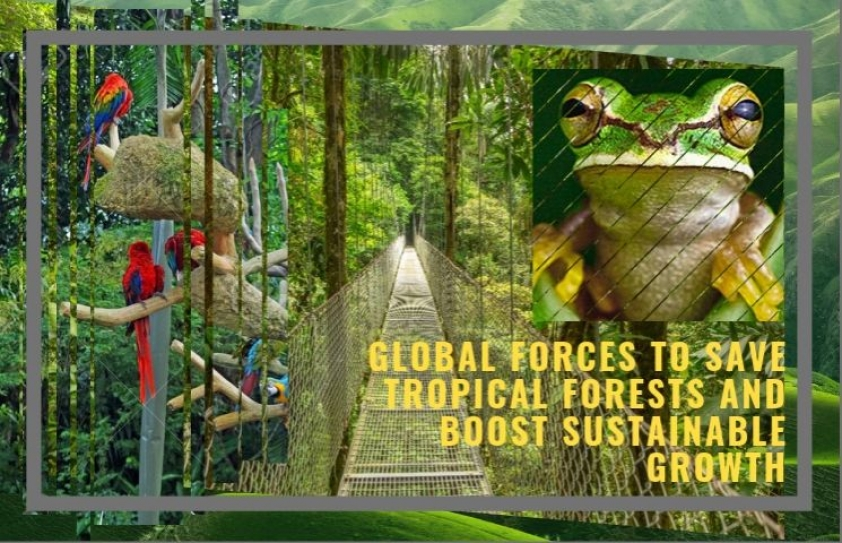 Global leaders join forces to save tropical forests and boost sustainable growth