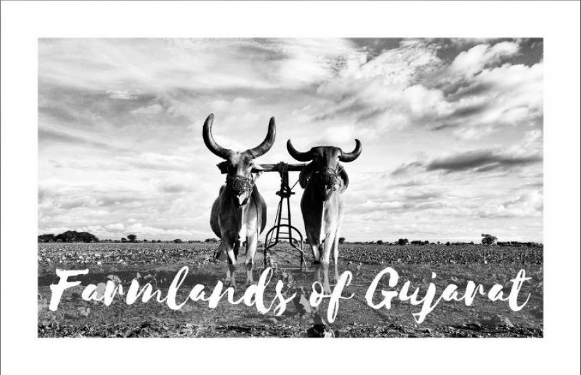 Farmlands of Gujarat: Escape for city-dwellers