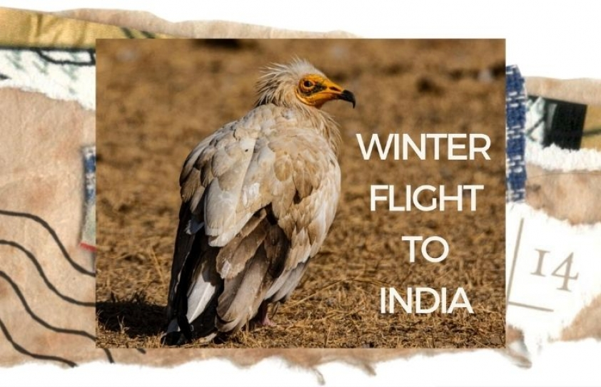 Winter flight to India